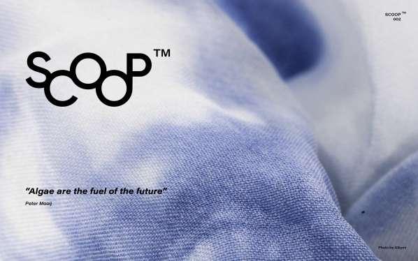 New Scoop™ of inspiration